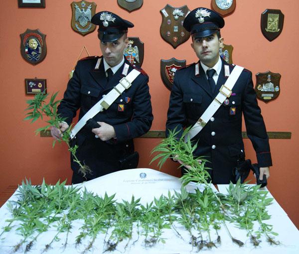 Foto_stupefacente_sequestrato_dai_Carabinieri_di_Messina_Sud1