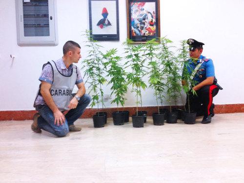 cannabisarte